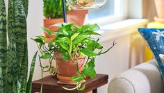 The best plants that clean indoor air