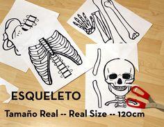 Esqueleto a tamaño real                                                                                                                                                                                 Más