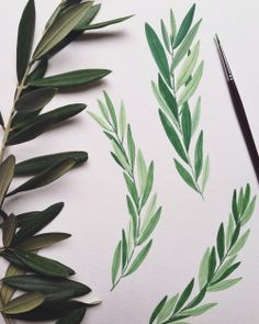 Olive leaves from the terraces . . . #illustration #plants #ohkiistudio #sketchbook #italiansummer #capri #watercolor #gouache #green #botanical (at Isle Of Capri, Italy)
