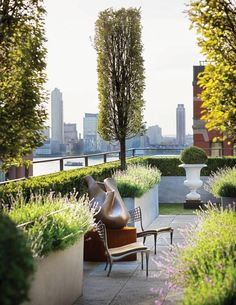Trees, box hedge and lavender planters on roof terrace