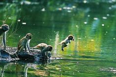Just like human kids, playing at the swimming hole; via Thai Wildlife Phu Khieo: Adorable!