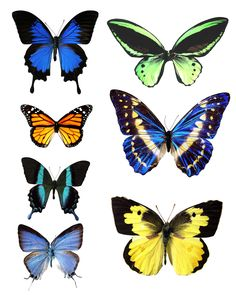 butterfly template printable | go to printable images of butterflies 1 print an image of butterflies ...
