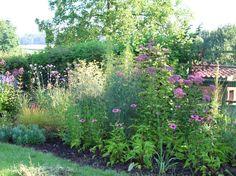 Borders in de tuin: de aanleg van een onderhoudsarme, ziekteresistente doorlevende plantenborder