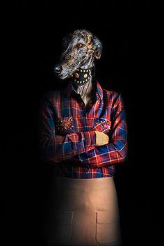 43-animaux-relookes-en-fashion-victimes-encore-plus-elegants-que-vous20