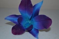 I know so many of you have been searching for these blue singapore or dendrobium orchids for your wedding as I have been, and we found some at. Blue And Purple Orchids, Blue Dendrobium Orchids, Dark Purple, Cheap Wedding Bouquets, Artificial Wedding Bouquets, Bridal Flowers, Silk Flowers, Flower Bouquets, Blue Flowers