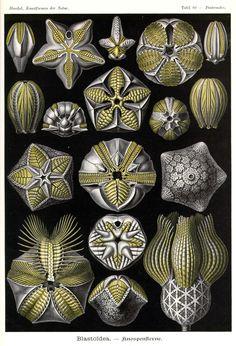 Diatomeas. Obras de arte de la Naturaleza