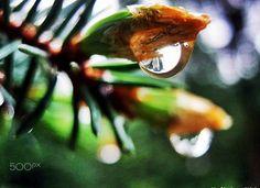 The rain was dancing, singing - null