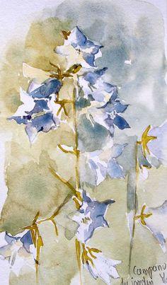 campanules bleues