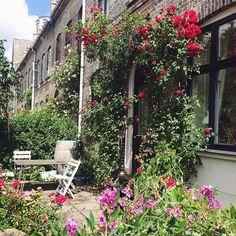 Humleby - Kantzone - edge/border - Front garden