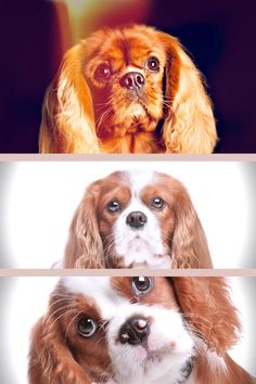 The Cavalier King Charles spaniel is among the most popular breeds worldwide and one look at them makes it simple to see why. These little dogs have smooth, streaming hair, adorable, friendly faces, and a character that makes them eager to get along with literally everybody and everything. Your Search Is Over For Tips About Dogs! Buy Them Here! Plenty of folks have pets now, or experienced them before. When you have a pet dog or prefer to acquire one, you should learn a few things. In the follow