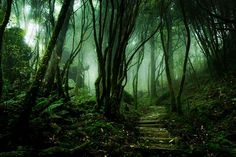 Taipingshan-taiwan-foret-obscur