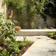 """Stefan Morael - plants&plans on Instagram: """"#bamboo combined with the warm #colors of #erumurus, #eucomis and #actaea give this courtyard an #exotic feel. Summer's here!"""" Bamboo Screening, Warm Colors, Exotic, Sidewalk, How To Plan, Plants, Summer, Instagram, Summer Time"""