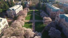 280 University Of Washington Ideas In 2021 University Of Washington Washington University