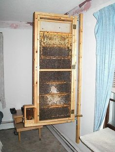 I would like to build this observation hive inside my house somewhere, but I cannot find the right space for it!