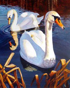 Swanning around - Paula oakley