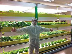 植物工場から有機農業まで:食糧問題に立ち向かう日本の若きアグリプレナーたち