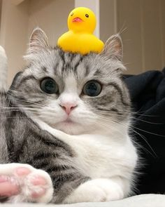 Raining Cats And Dogs, Cute Cats And Dogs, Animals And Pets, Baby Animals, Cats And Kittens, Cute Funny Animals, Funny Cats, Halloween Cat, Beautiful Cats