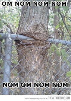 Treelicious!