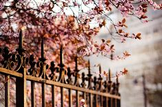 Fin de journée printanière (I) by *elisem, via Flickr