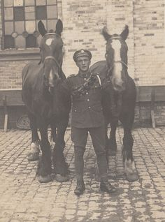 the real War Horses