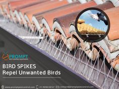 8 Best Bird Spikes images in 2017   Cnd nails, Liberty