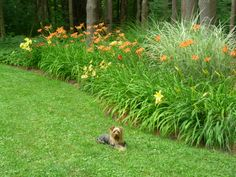Ray and daylily garden