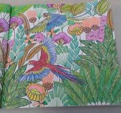 Millie Marotta.  Tropical World.  Parrots. Colored by Mayra.