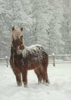 This mare is Winiver. She loves the winter. She is very playful and energetic. She is 4