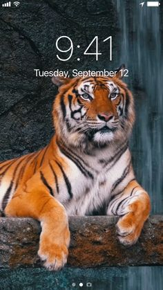 🐾 Amazing Live Wallpapers! 📲 Liven up your           screen Now!