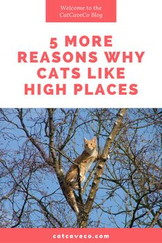 Kittens Cutest, Cats And Kittens, Animals And Pets, Cute Animals, Cat Exercise, Cat Climbing, Cat Behavior, Draft Horses, Cat Facts
