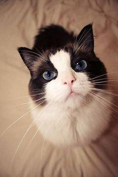 Big blue eyes *-*