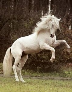 Beautiful Horse #horses, #animals, #pinsland, https://apps.facebook.com/yangutu/