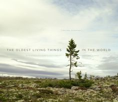 The Nature Lover: The Oldest Living Things in the World by Rachel Sussman