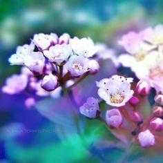 Spring flowers - 5x5 Fine Art Photography. $15.00, via Etsy.