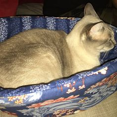 Etsy customer photo and feedback for the Cat Canoe® cat bed: TheCatBall did a custom order no problem at all and so thankful she had some leftover fabric in this print 😸 seems like Miso is a fan of it and jumped right in her canoe no problem at all. THANK YOU so much for this and I'll definitely be getting a ball one shortly!!!