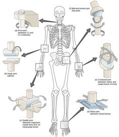 Read more about types of synovial joints in the Boundless open textbook.