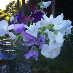 cool vancouver florist The last of our sweet peas from the Postmark picking garden. Sad to see them go. #lovebc #localflowers #bcfarmfresh #postmarkflowers #greendelivery #grownlocal #vancouverweddings #vancouvergrown by @postmarkflowers  #vancouverflorist #vancouverflorist #vancouverwedding #vancouverweddingdosanddonts