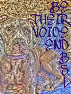 Be Their Voice.  End BSL.