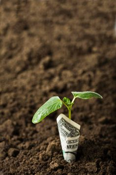 Dollar wrapped around seedling in dirt Wrap Around, Plants, Plant, Planets
