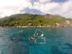 Busy last dives of the term with surveys, fun dives, methodology training, and species spots! #GVISeychelles