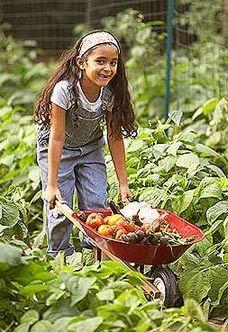 How-To Garden: Successful Vegetable Gardening