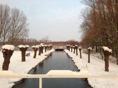 Winter in Delftse Hout