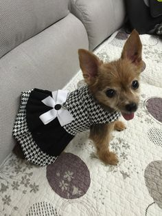 Hey, I found this really awesome Etsy listing at https://www.etsy.com/listing/237115459/dog-dress-black-houndstooth-with-two
