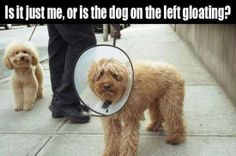 "Funny meme of dog ""gloating"" at other dog."