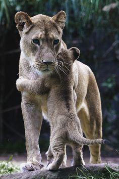 Abrazando a mama