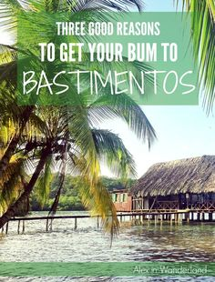 Isla Bastimentos in Panama is a great place to relax.  Do yoga, go scuba diving, or tour a chocolate farm | Alex in Wanderland #diving #Panama #yoga #travel: