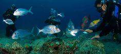 Scuba Diving Madeira quer promover mergulho na Madeira