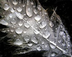 A Photo of a Feather with Rain Drops using by TonyBeaverPhoto