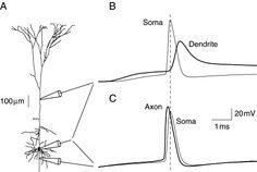 Biology Art, Diagram, Chart