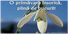 8 Martie, Hug, Banana, Romania, Gardens, Birthday, Outdoor Gardens, Bananas, Fanny Pack